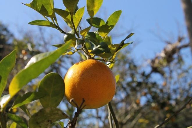 . . . oranges . . .
