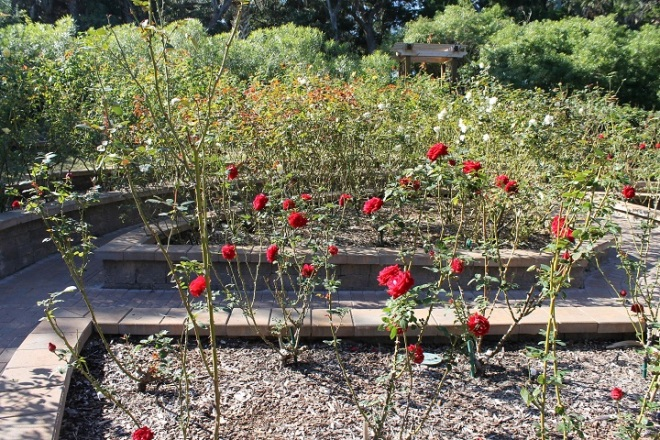 The Rose Garden was a little depleted this time of year (will definitely come back in the summer), but . . .