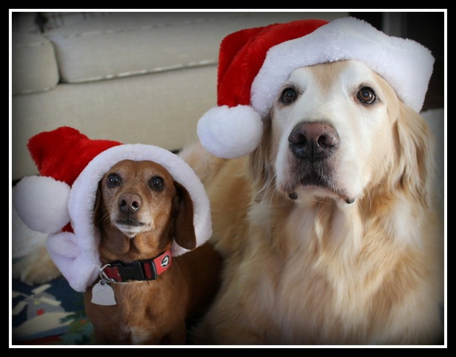 Ho, Ho, Woof!
