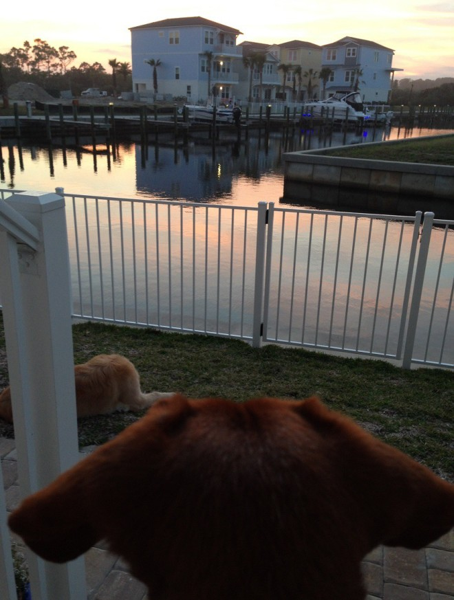 Maddie and Bear - watching Ted piddling around on the boat across the inlet.